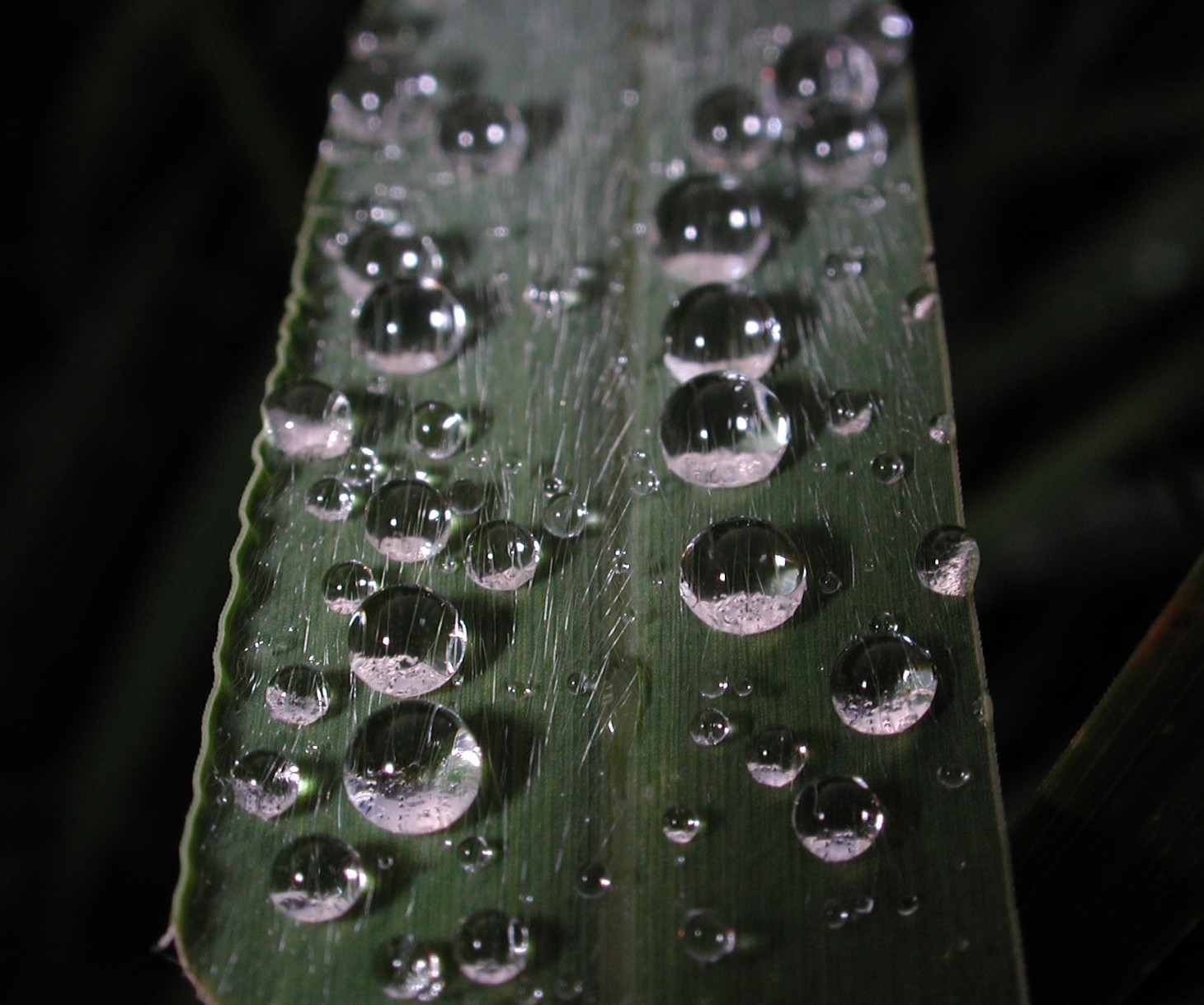 Leaf of Grass byThomas Peace 2012