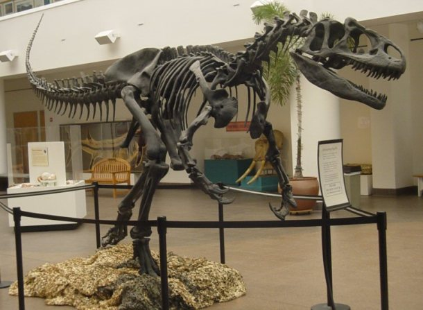 Allosaurus (San Diego Natural History Museum)