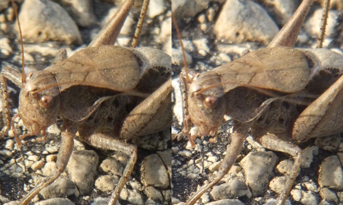 Jiminy Cricket by Thomas Peace c.2013