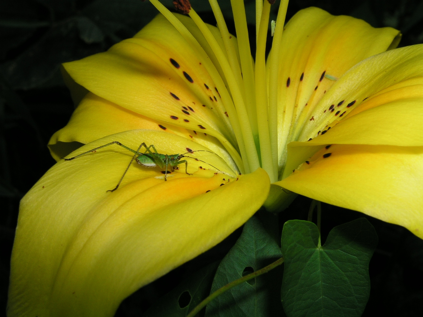 Three Bugs in an Eternal Flower (1) by Thomas Peace 2013