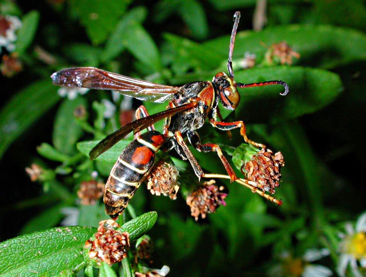 Wasp by Thomas Peace 2013