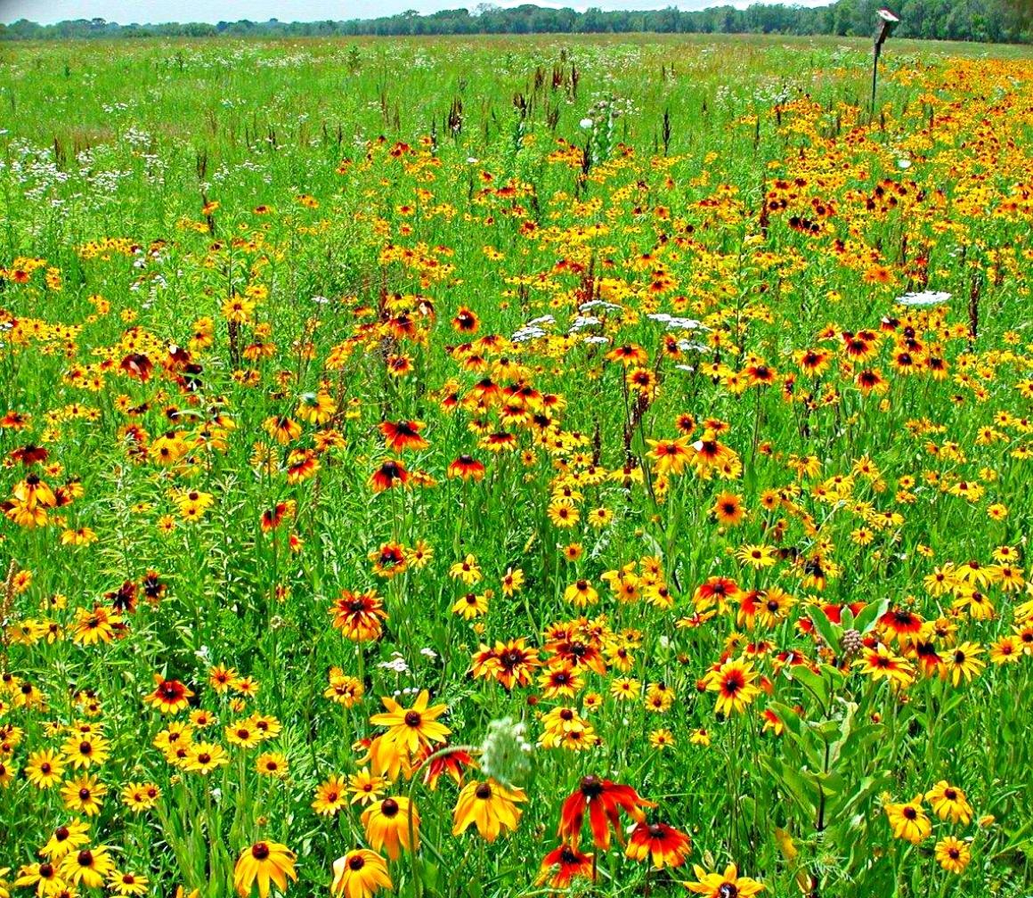 Wild Flowers by Thomas Peace 2013