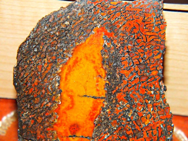 Polished Dinosaur Bone (1) by Thomas Peace 2013