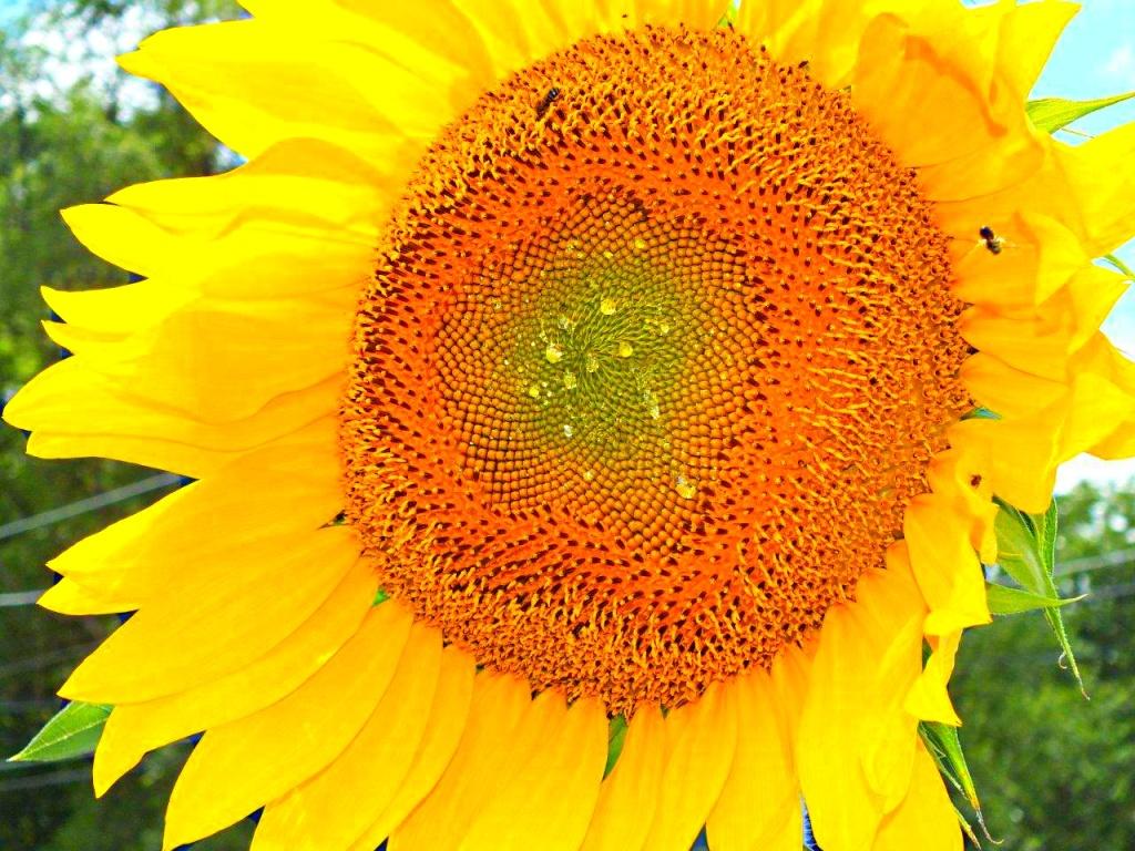 U R the Sunshine in my life... byThomas Peace 2013