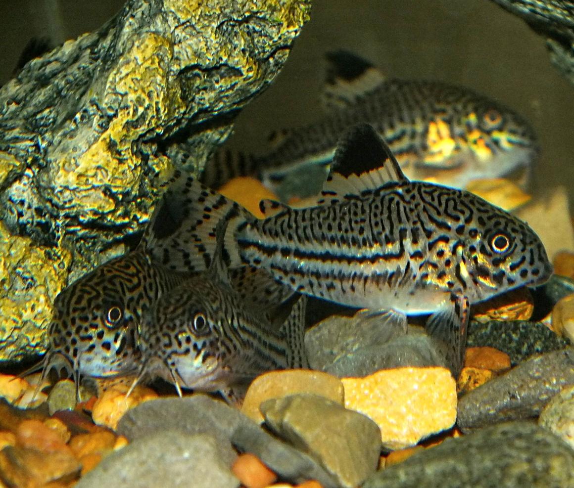 Small bottom dwellers.  Photo by Thomas Peace 2014