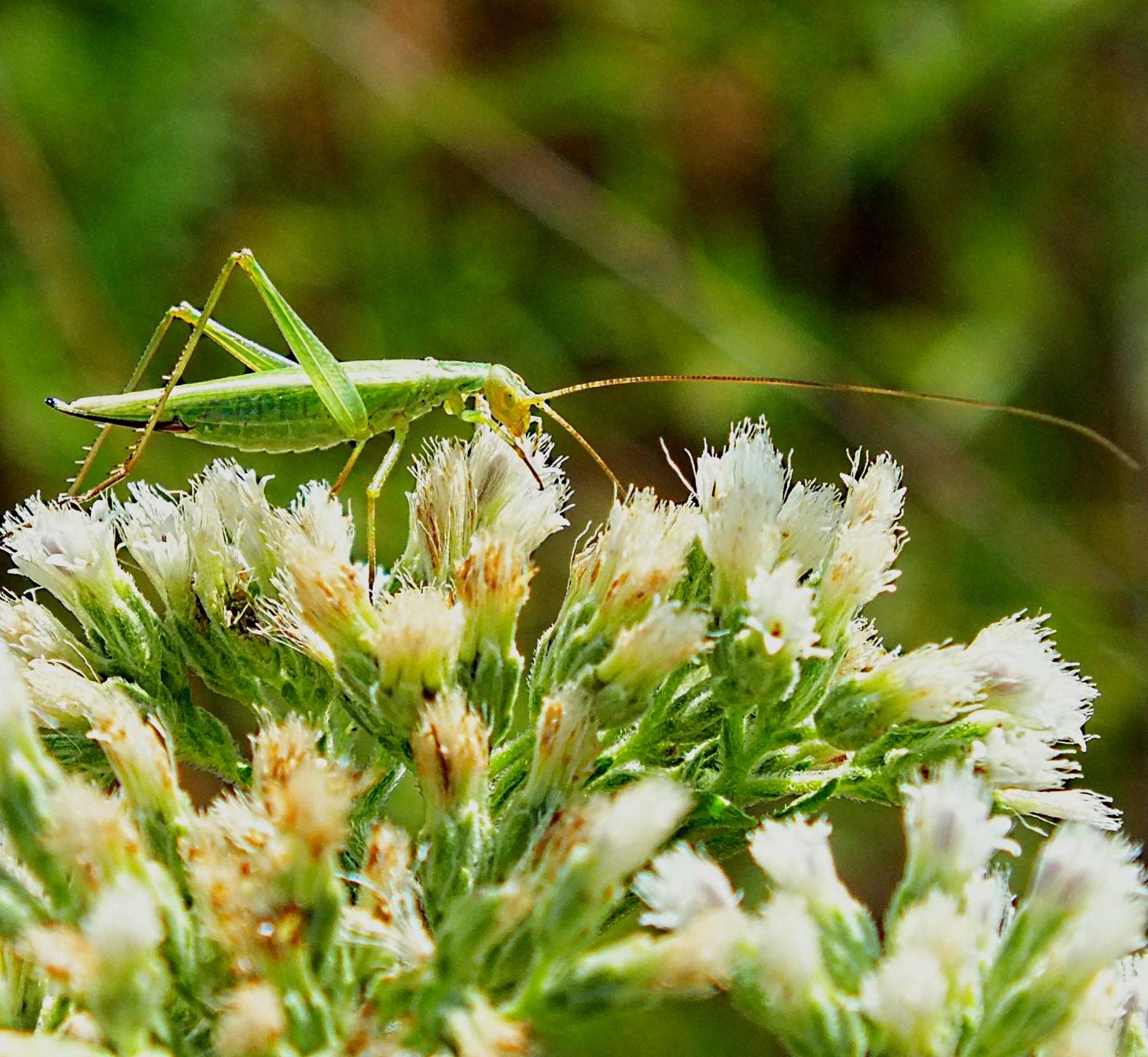 Jiminy Cricket!  Photo by Thomas Peace 2014