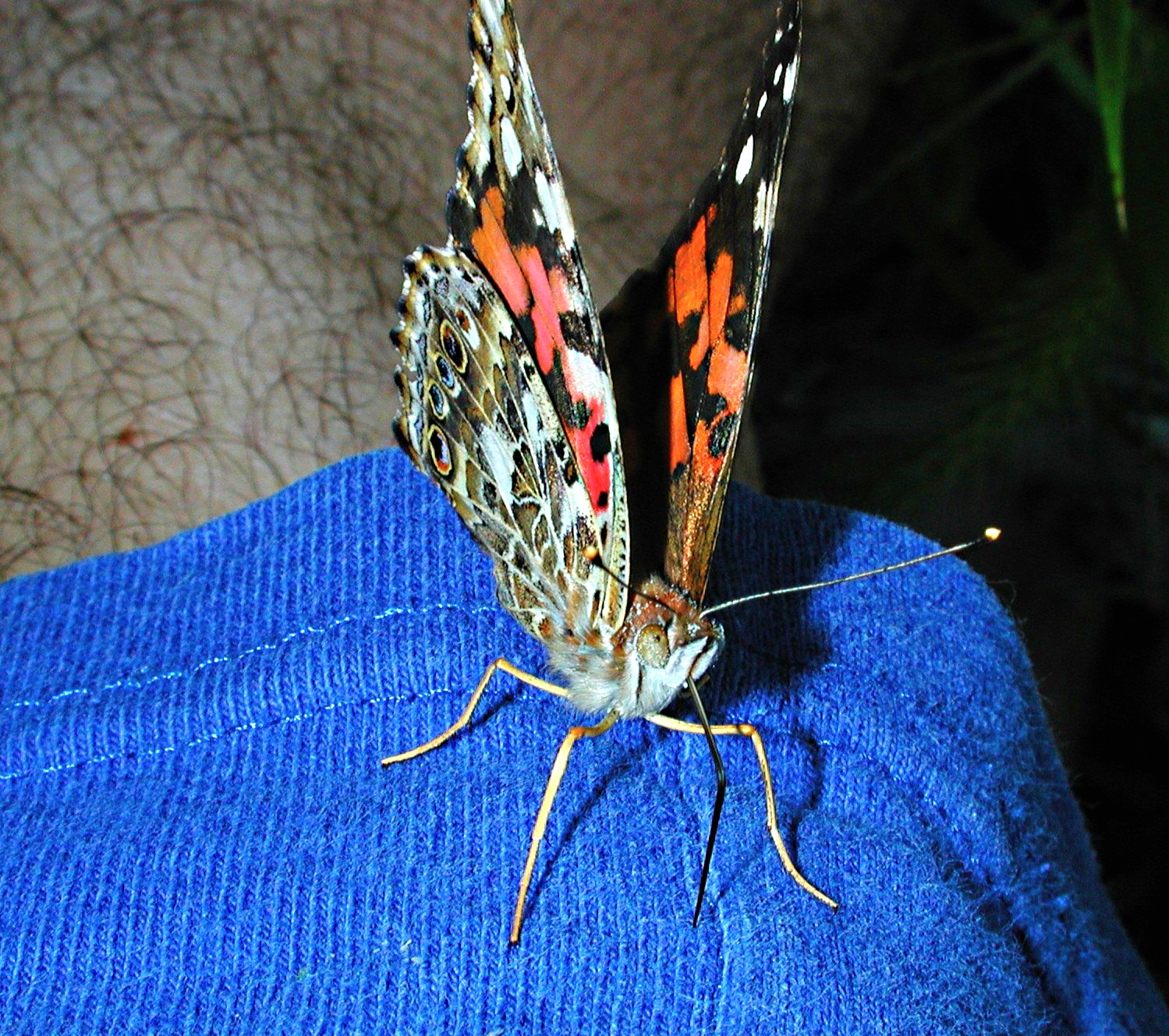Another six-legged friend! (2) Photo by Thomas Peace 2014