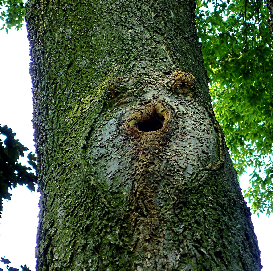 """Calling all tree huggers... I need a hug!""  Photo by Thomas Peace 2014"