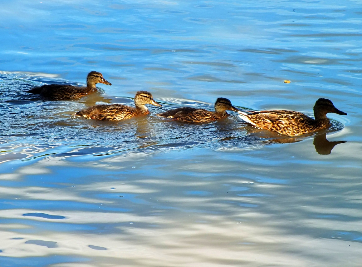 The real Duck Dynasty (part 2) Photo by Thomas Peace 2014