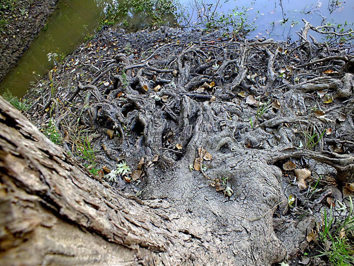 Roots to Branches (2). Photo by Thomas Peace 2014