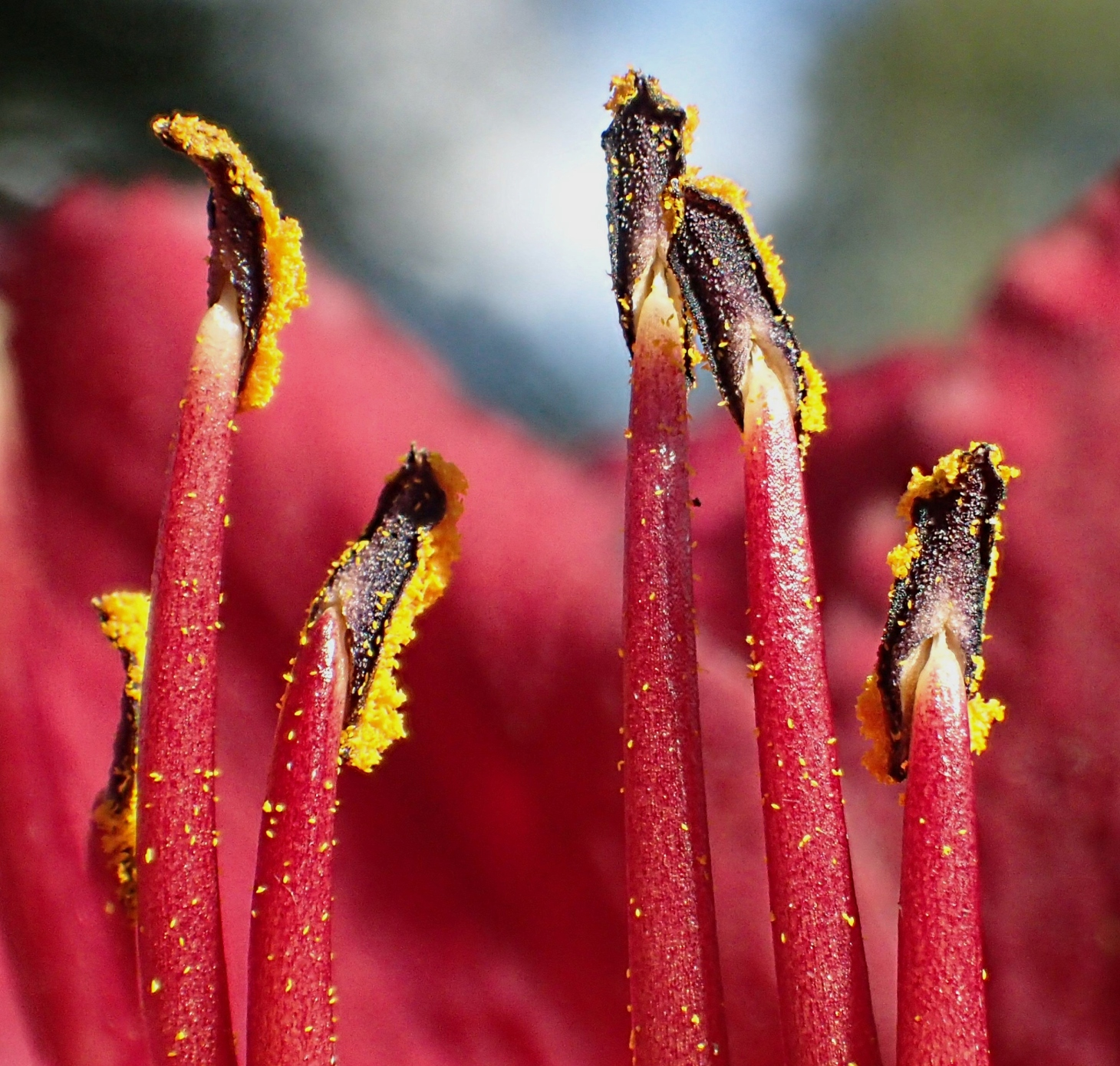 Pollen machines.  Photo by Thomas Peace 2014