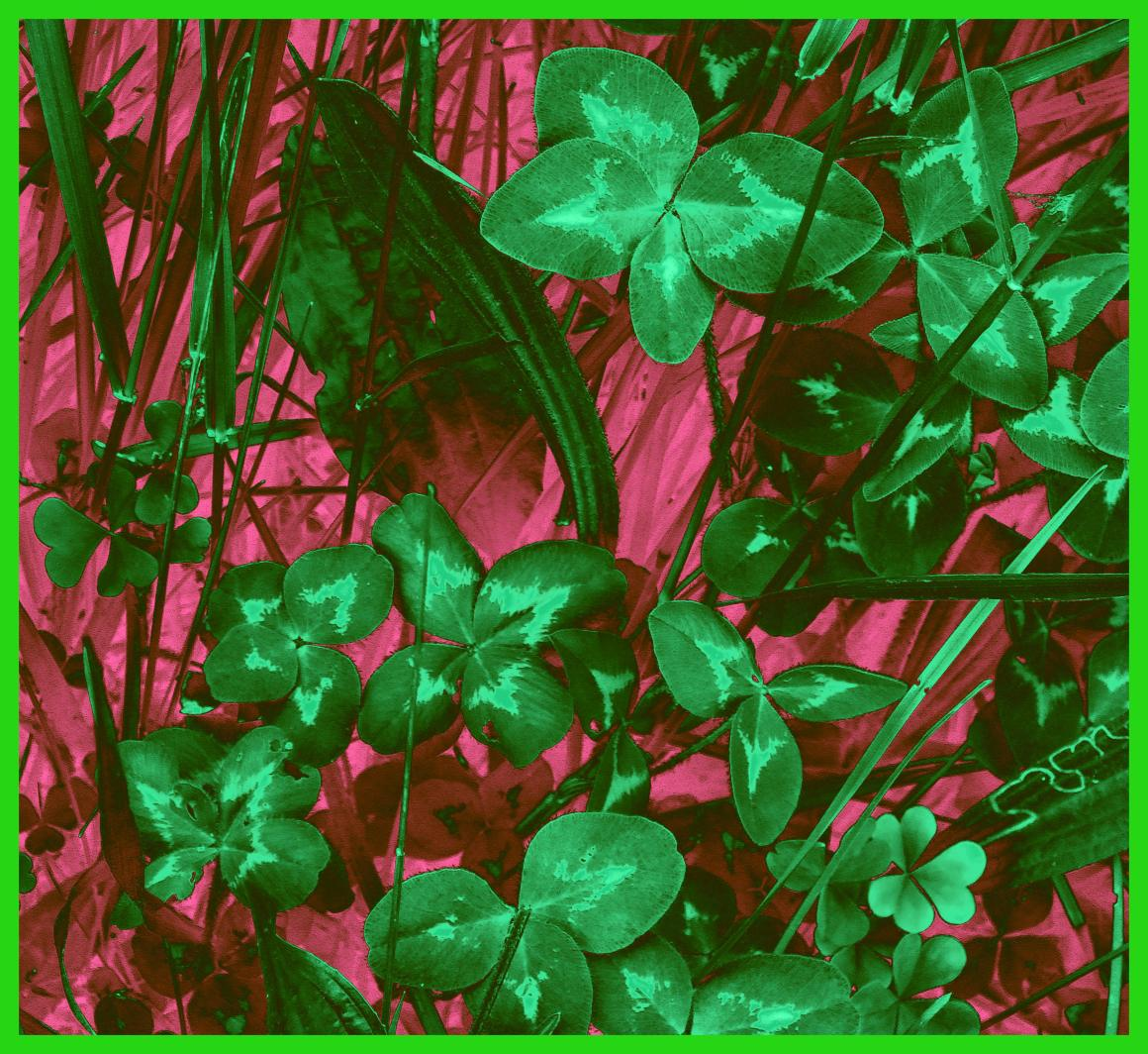 Be a 4-leaf clover (2).  Photo by Thomas Peace c. 2015
