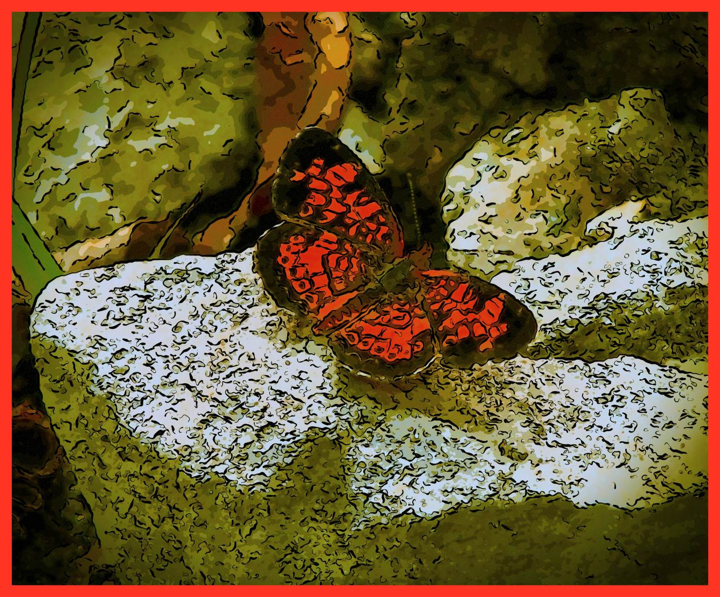 Pearl Crescent Butterfly. (2) Photo by Thomas Peace c. 2015