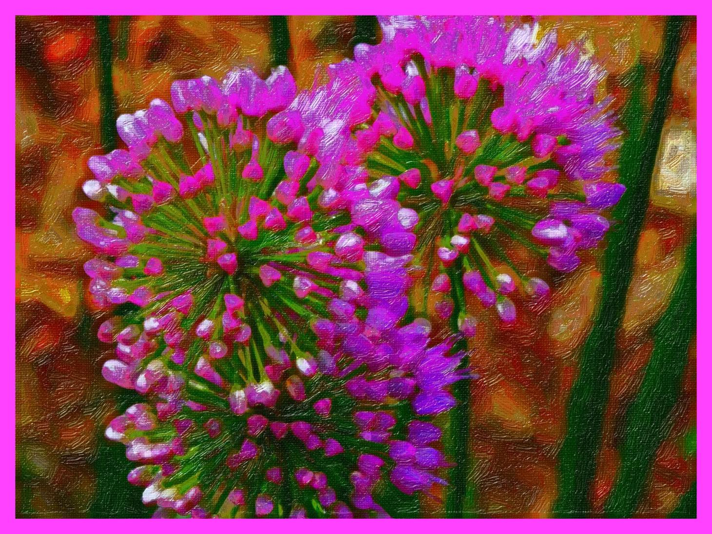 Chives, together as one. (2) Photo by Thomas Peace c. 2015