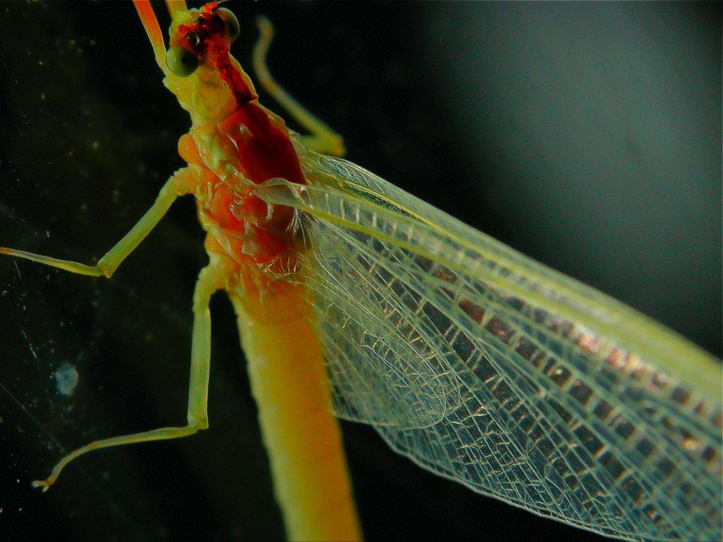 Mayfly Study. Photo by Thomas Peace c. 2015