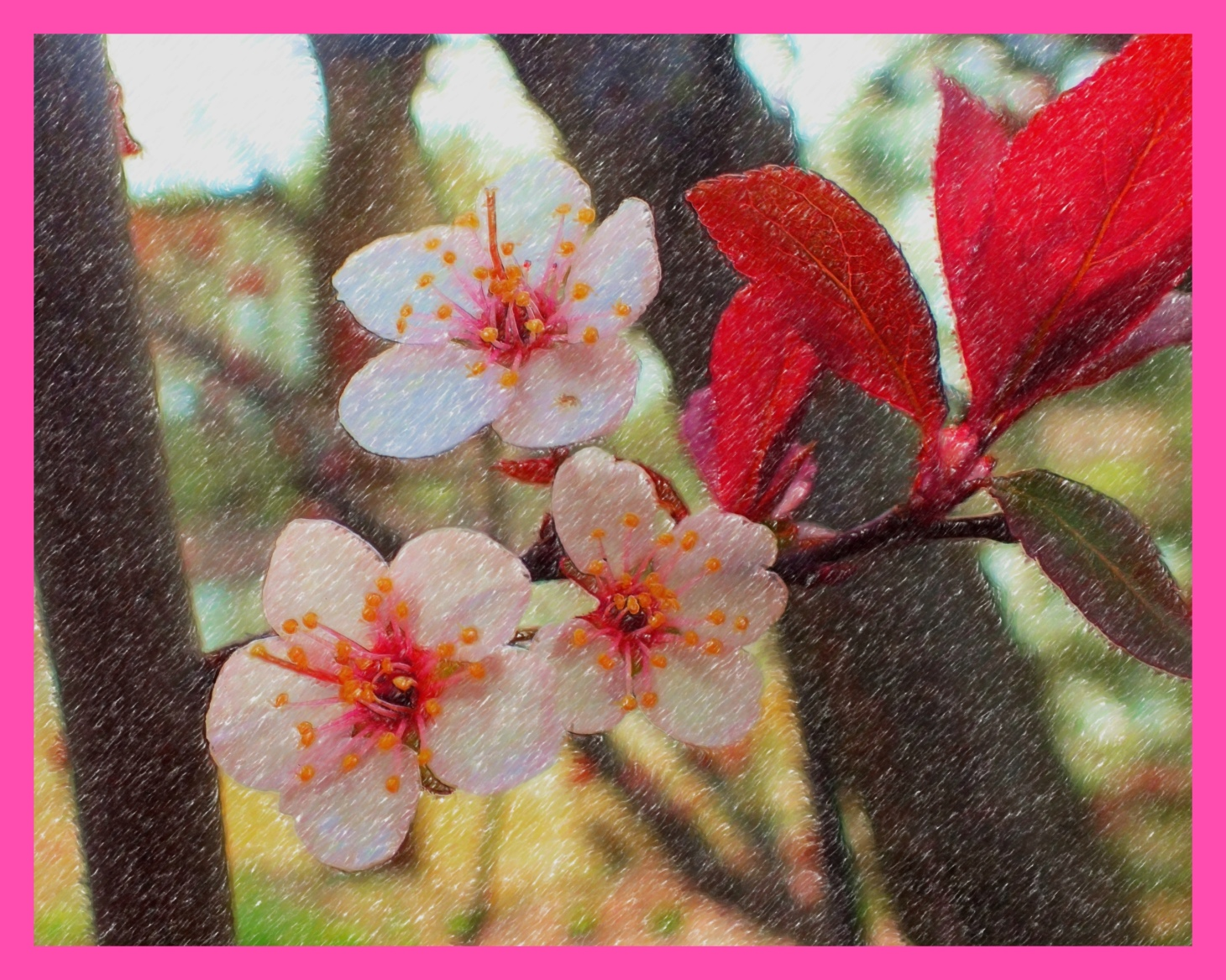 Plum Tree Blossoms. (2) (Digital Color Pencil Rendition) Photo by Thomas Peace c. 2015