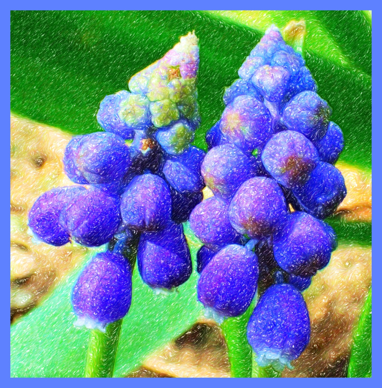 Grape Hyacinths (2) (Color Pencil, Digital) Photo by Thomas Peace c. 2015