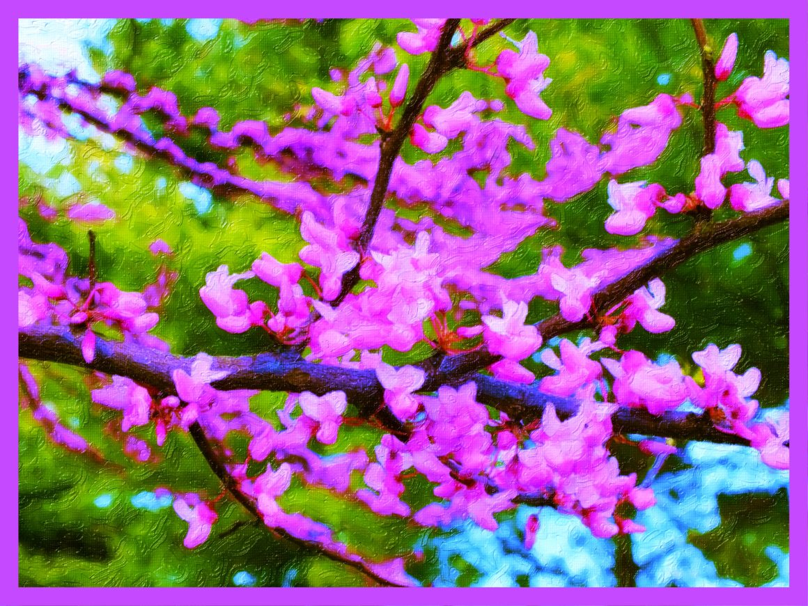 Eastern Redbud Study.  (2)  Photo by Thomas Peace c. 2015