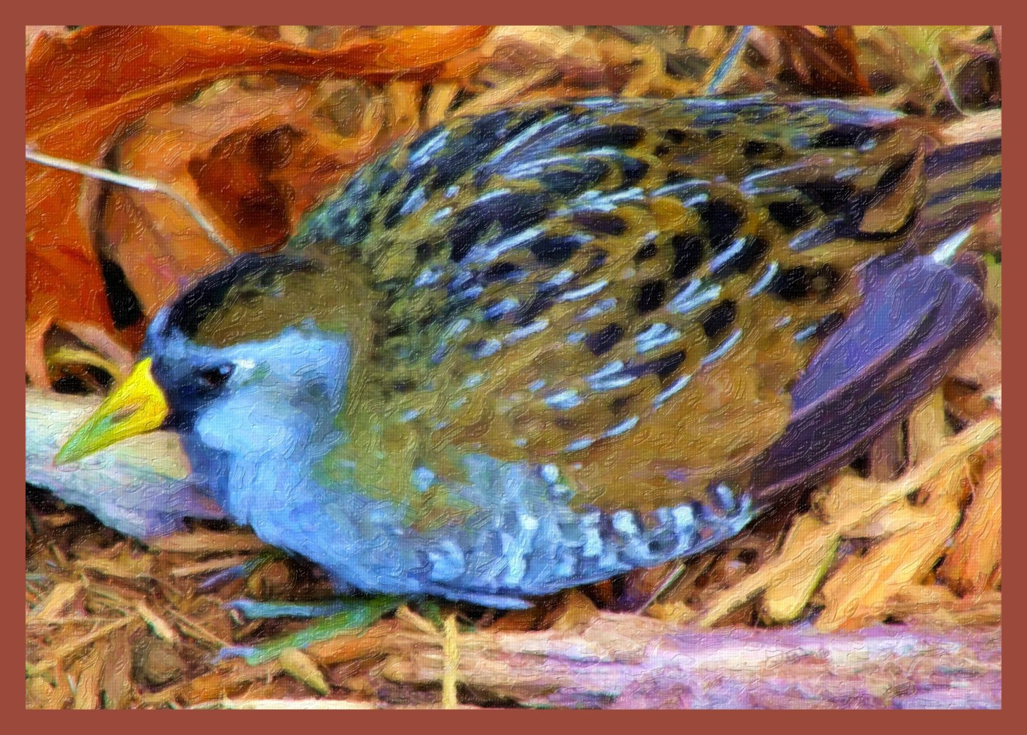 Resting Fledgling. (2) Photo by Thomas Peace c. 2015