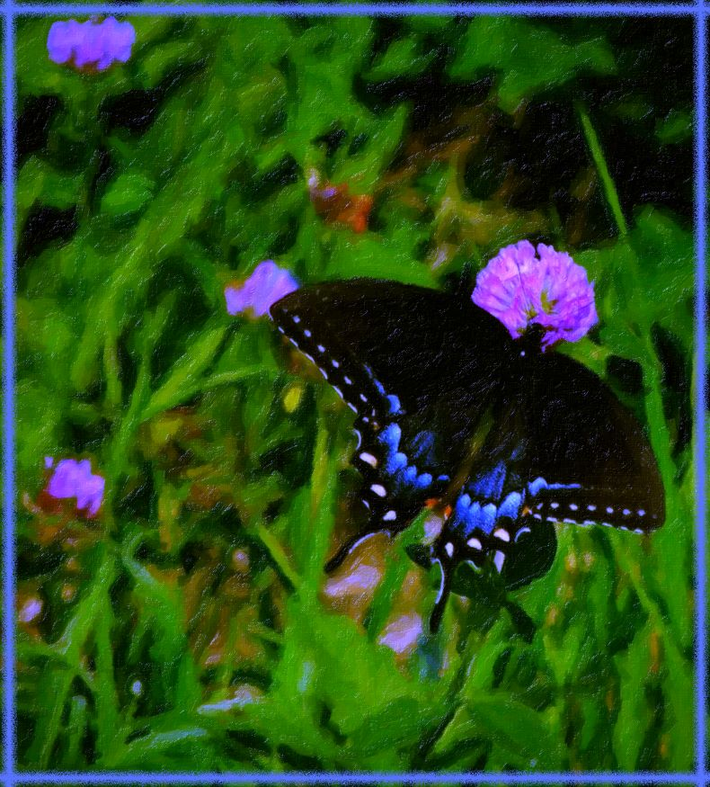 Spicebush Swallowtail (2) Photo by Thomas Peace c. 2016