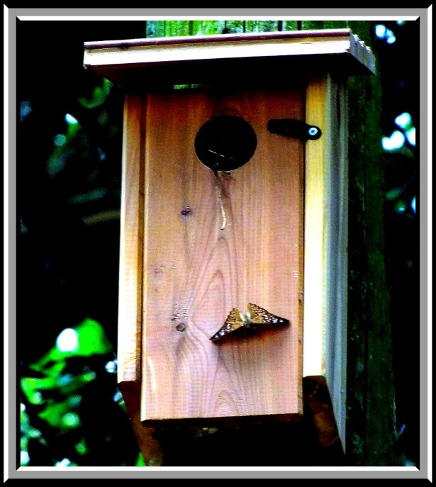 Of Butterflies on Birdhouses. Photo by Thomas Peace c. 2016