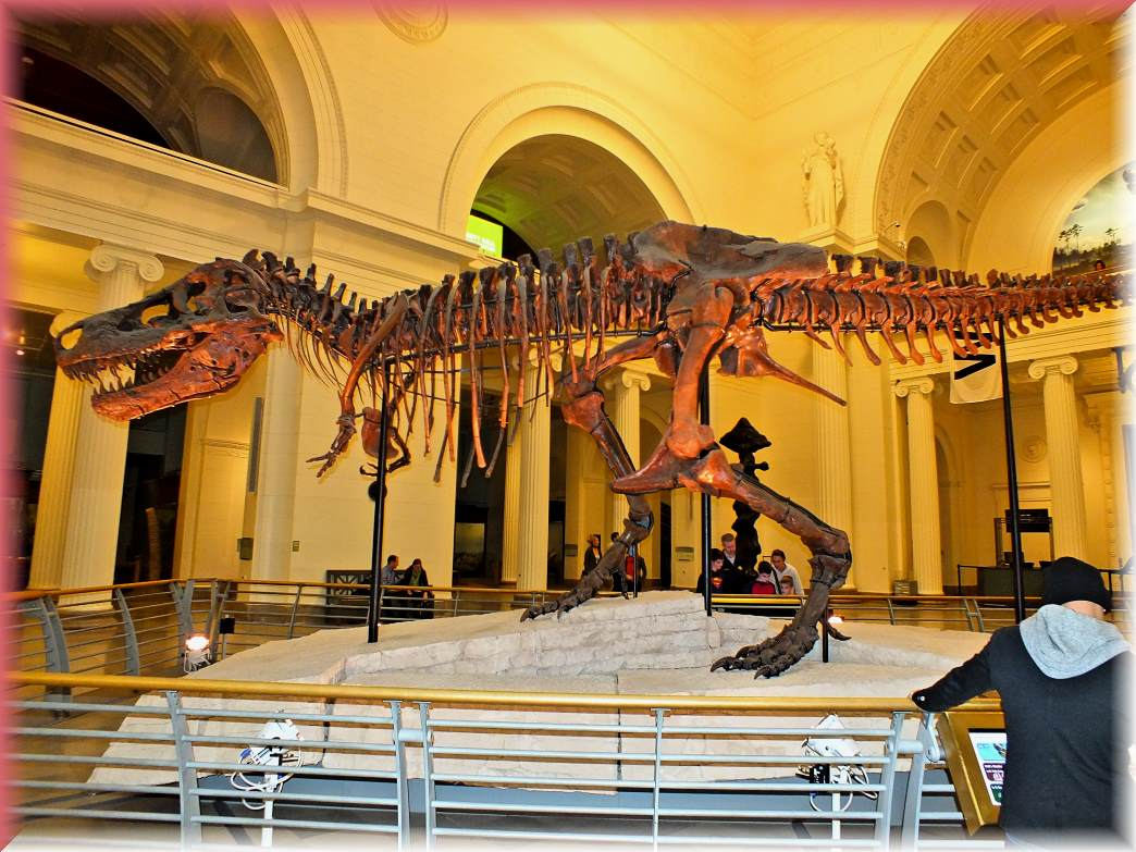 Tyrannosaurus rex at the museum (1) Photo by Thomas Peace c. 2017